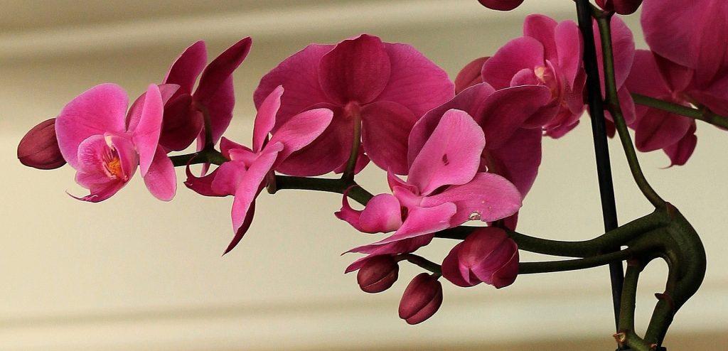 Quel cache pot pour un orchidée ?